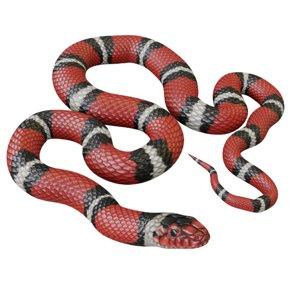3D scarlet king snake model