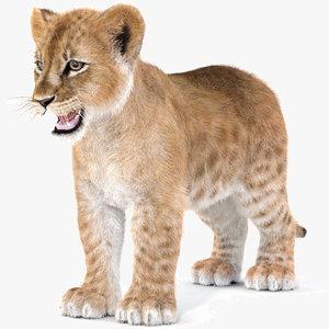 baby lion furry hair fur 3D