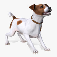 spotted jack russell terrier 3D model