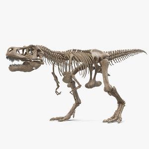 3D tyrannosaurus rex skeleton fossil