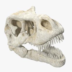 tyrannosaurus rex skul skull 3D