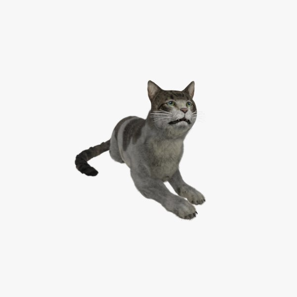 cat european shorthair 3D model