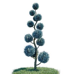 cupressus arizonica pon spiral 3D