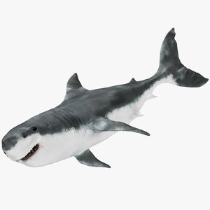 realistic shark rigged model