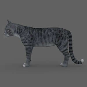 3D model rigged cat