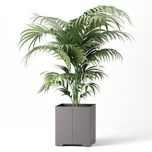 3D pot cape palm model