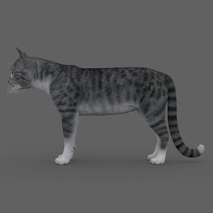rigged cat model