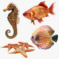 3D underwater animals 1