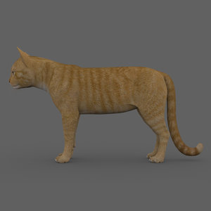 3D rigged cat model
