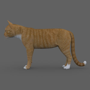 rigged cat 3D