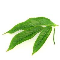 tea leaf 3D model