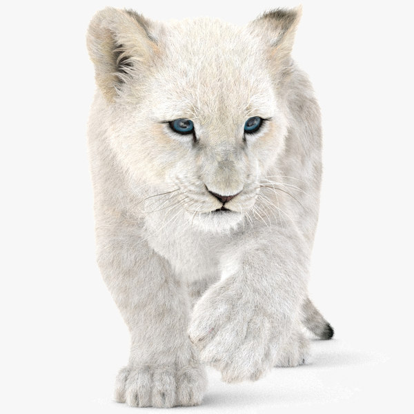 3D white baby lion rigged model