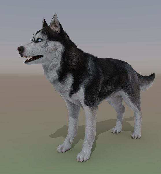 3D huskies rigged