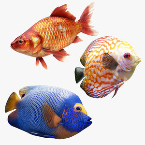 tropic fish 1 model