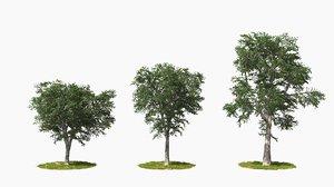 3D tree animation