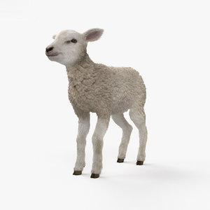 lamb sheep animal 3D