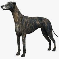 3D greyhound