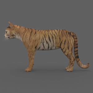 3D rigged cat