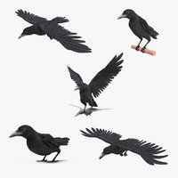 raven animate 3D model