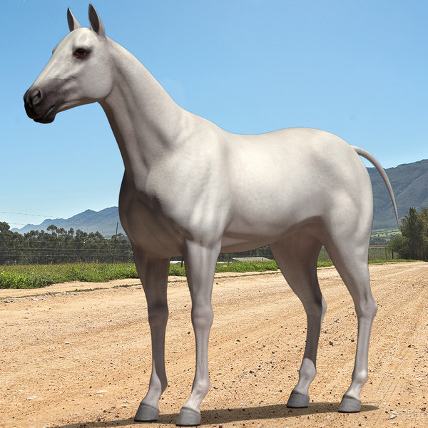 3D white horse rigged