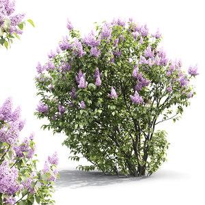 bush flowers corona model