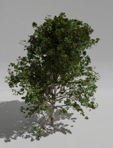3D green tree