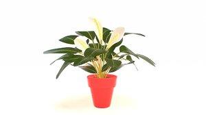peace lily 3D model