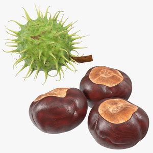 horse chestnut set nut 3D