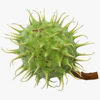 Ripe Chestnut