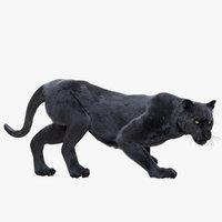 Panther Fur (Rigged)