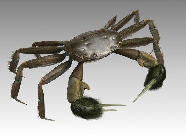 crab female rigged 3D model