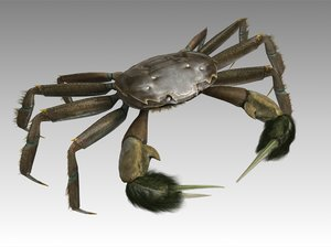 crab female rigged 3D model