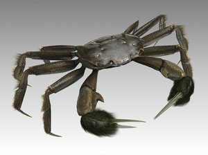 crab male rigged model