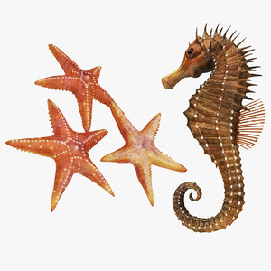 sea horse star fish 3D model