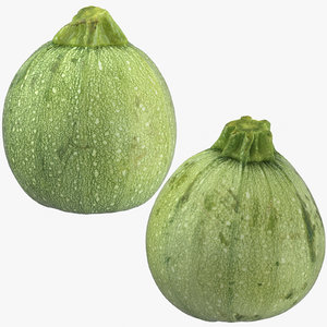 3D zucchini 03 model