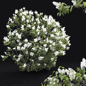 bush 3 model