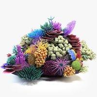 Coral Reef 01