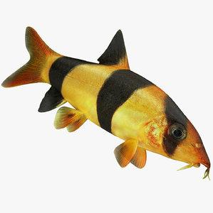 3D clown loach fish rigged model