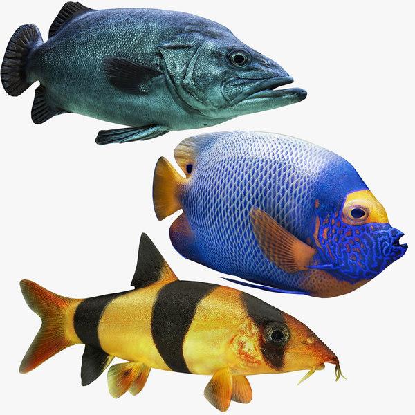 3D deutschland fish model