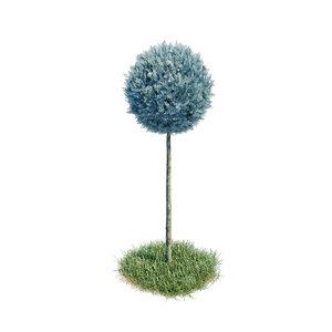 cupressus arizonica stamm sphere model