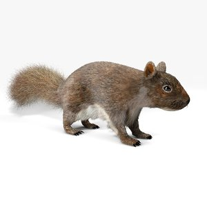 wild squirrel fur 3D model