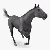 black horse fur rigged model
