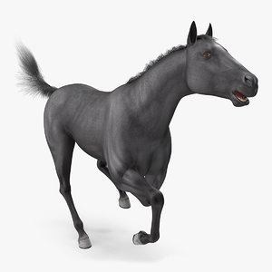 black horse fur rigged model