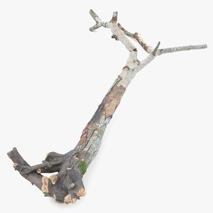 tree broken withered roots 3D model