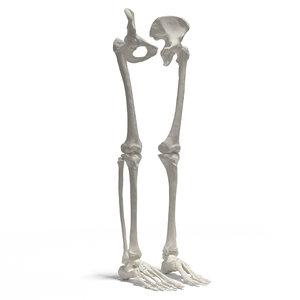 3D skeleton leg model