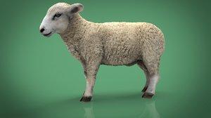 3D mammal nature livestock