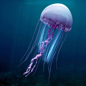 realistic jelly fish 3D model