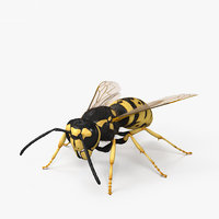 european wasp 3D model