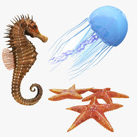 jellyfish sea horse star 3D model