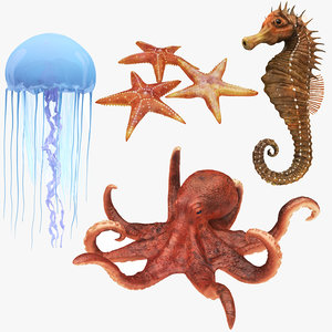 3D underwater animals 2 octopus